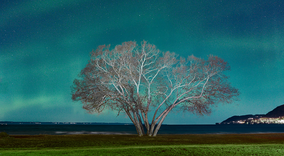 The Broccoli Tree / Patrik Svedberg