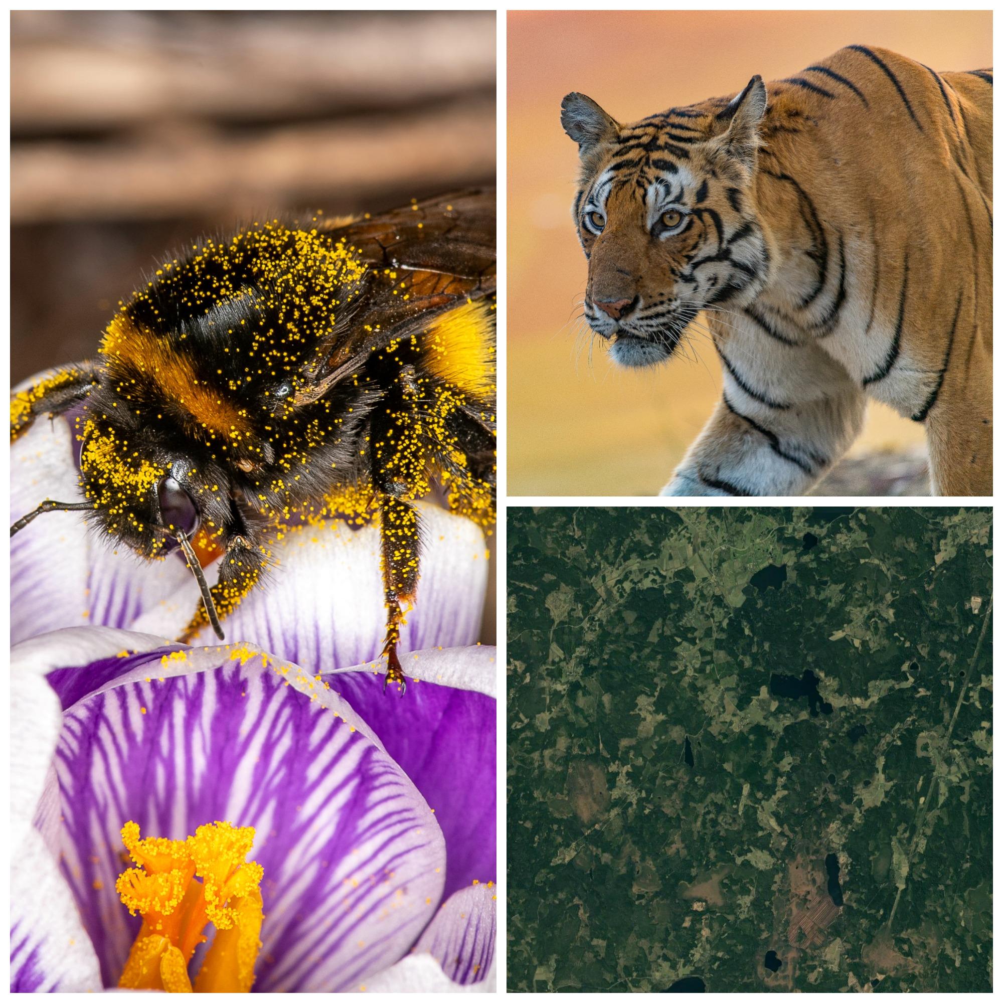 Randiga djur: Biologisk mångfald i världen & i Östra Vätterbranterna
