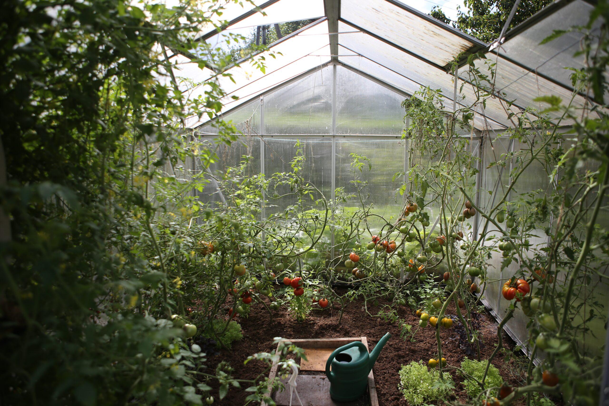 Kolonilottens studiecirkel: Växthus