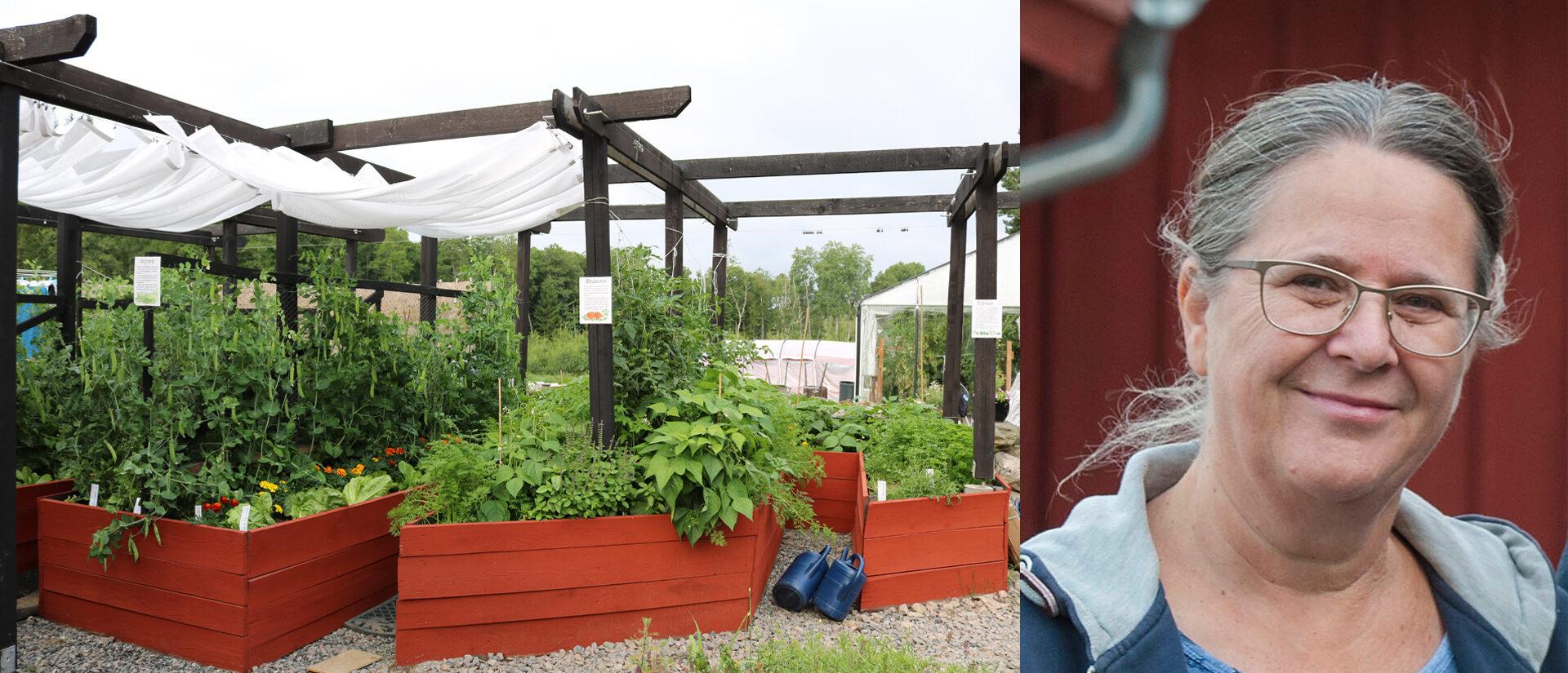 HÄLSOVECKAN: Permakultur, en hållbar framtid i din trädgård!
