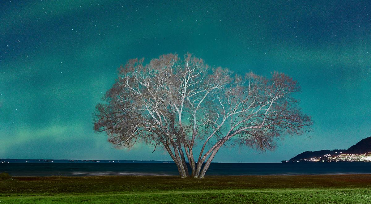 The Broccoli Tree / Patrik Svedberg